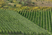 Vineyards on the Moselle — Stock Photo