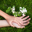 Stock Photo: Hands of lovers on grass