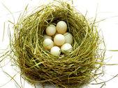 Nest — Stock Photo