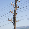 Stock Photo: Old power line
