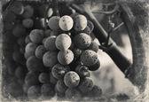 Raisins — Photo