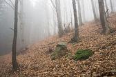 хрен лес — Стоковое фото