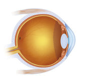 Laser treatment on the eye — Stock Photo