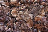 Frostiges Laub. Frozen foliage — Stock Photo
