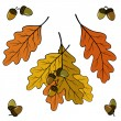 Stock Vector: Oak leaves and acorns