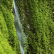 Foto de Stock  : Waterfall in Greenery