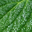 Stock Photo: Ice On Green Leaf
