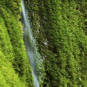 Waterfall in Greenery — Stock Photo