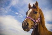 Healthy horse portrait — Stock Photo
