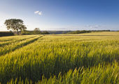 Dramatic sky, Idyllic rural landscape, Cotswolds UK — Stock Photo