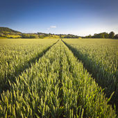 Dramatischer himmel, ländliche idylle, cotswolds uk — Stockfoto