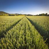 戏剧性的天空,田园诗般的乡村景观,英国科茨沃尔德 — 图库照片