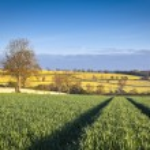 Idyllic rural landscape, Cotswolds UK — Stock Photo