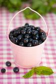 Fresh blueberries in a bucket. — Zdjęcie stockowe