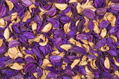 Beautiful background of dry flowers — Stock Photo