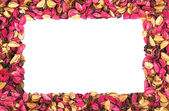 Frame of red flower petals on a white background — Stock Photo