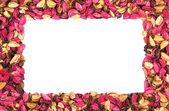 Marco de pétalos de flores rojas sobre un fondo blanco — Foto de Stock