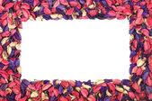 Cornice di petali di fiori su sfondo bianco — Foto Stock