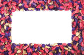 Frame of flower petals on white background — Stock Photo