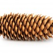 Fir cone on white background — Stock Photo