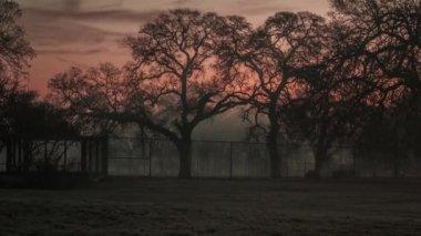 Dawn. horse. morning. fog. time laps — Stock Video