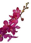 Fleurs d'orchidées, isolés sur fond blanc — Photo