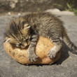 Stock Photo: Kitten on potatoes