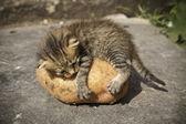 Kitten on potatoes — Stock Photo