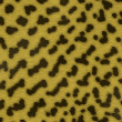 Animal skin 1 - Stock Photo