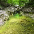 Stones and creek in bright green forest. — Foto de Stock