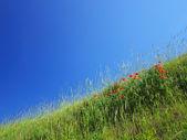 Fresh green herb on background bright sky. — Stock Photo