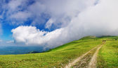 Panorama of the green hill and big white cloud — Stock Photo