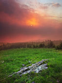 Meadow with green herb during bright sundown — Stock Photo