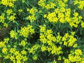Textura floral — Foto Stock
