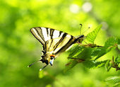 Butterfly on the leaves of the tree — Stock Photo