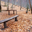 Bench in the autumn forest — Stock Photo