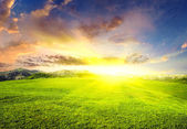 Glow sun on green meadow. — Stock Photo