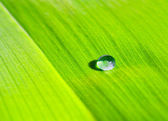 Drop on a green leaf — Stock Photo