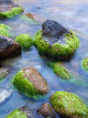 Stones with algae on the seashore. — Stock Photo