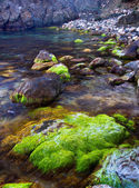 Stones with algae on the seashore. — Foto Stock