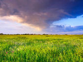 Rainy sky over the field — Stock Photo