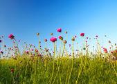 草地上的花朵. — 图库照片