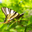 Stock Photo: Butterfly on branch