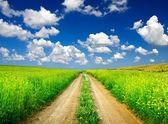 Road amongst green meadow — Stock Photo