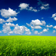 Green field and sky. Agricultural composition — Foto Stock