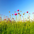 Flowers on meadow. — Stock Photo