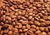 Grãos de café fresco. — Foto Stock