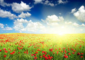 Picturesque poppy field — Stock Photo