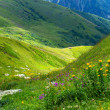 Bright meadow in mountain. Composition of the nature — Foto de Stock