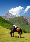 Horse in a mountains — Stock Photo